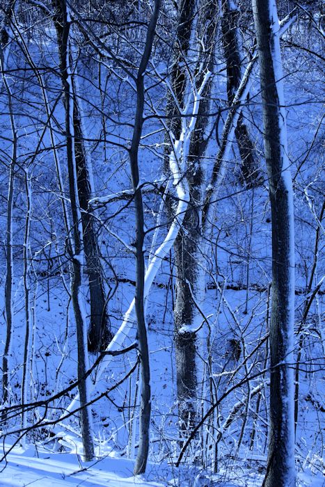 tree©Virginia Spencer, thepurpledogpaintingblog, 2012