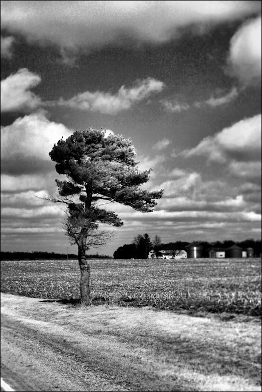 tree1©Virginia Spencer, thepurpledogpaintingblog, 2013