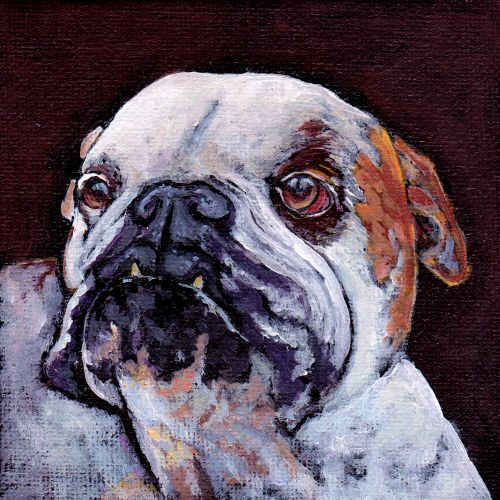 bulldog2©Virginia Spencer, thepurpledogpaintingblog.com, 2014