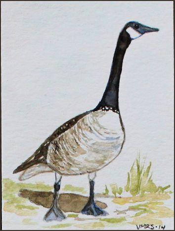 goose3©Virginia Spencer, thepurpledogpaintingblog, 2014