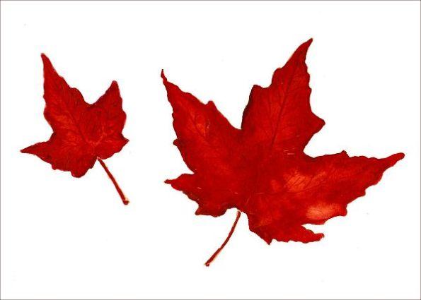 maple_leaf_memorial