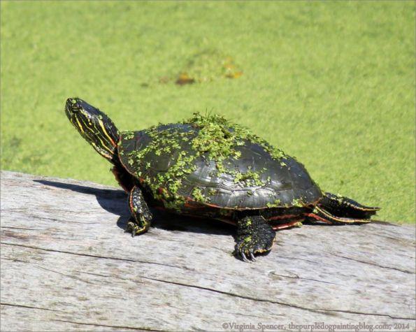 turtle_moss_log