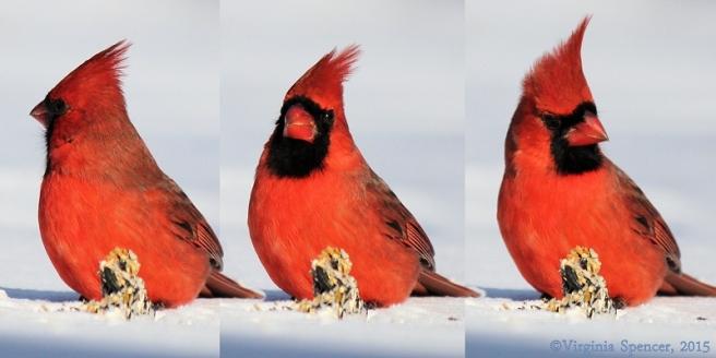 cardinal_panorama