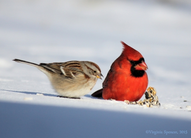 cardinal_sparrow_birdseed