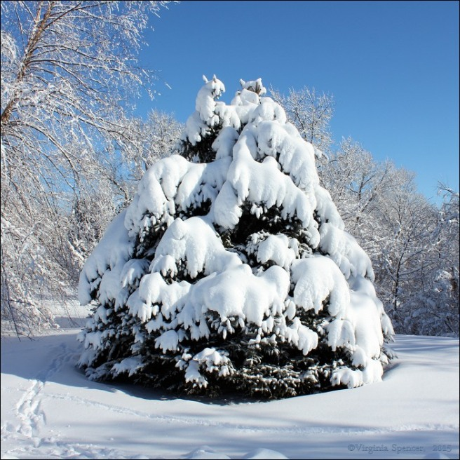 tree_snow_winter_cold
