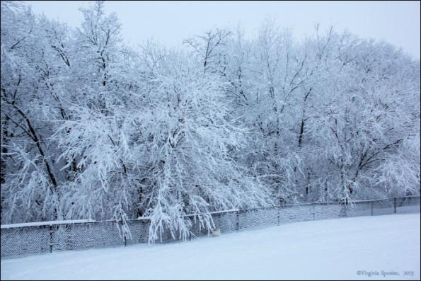 white_dog_snow_westie