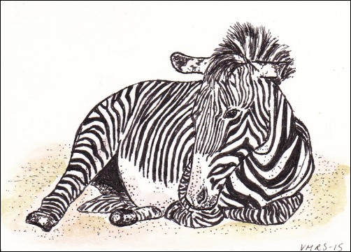 zebrasnoozingatc