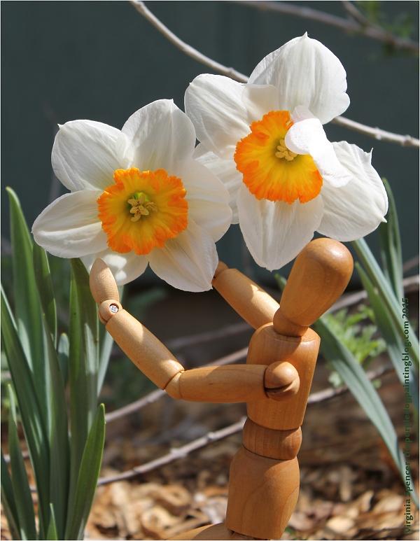 dummy_daffodil
