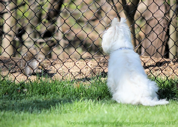 dog squirrel westie