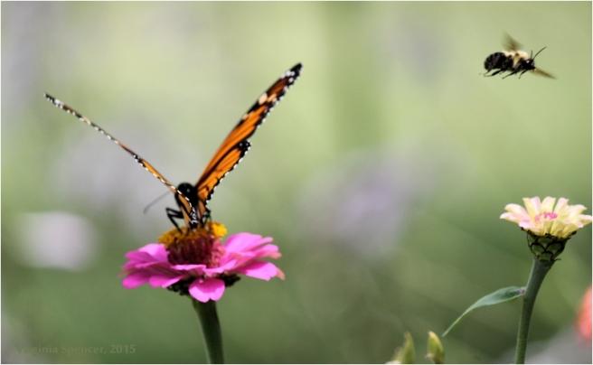 Monarch_bee_butterfly