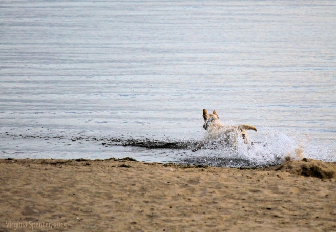 dog lake water chase