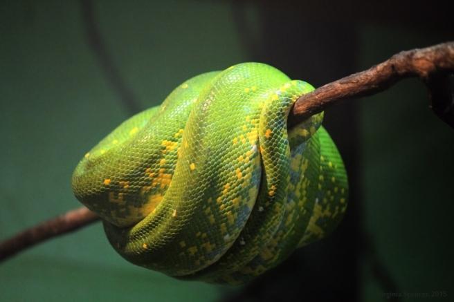 snake green hanging