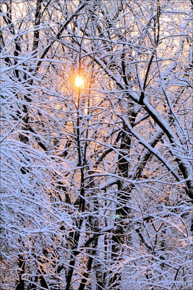 winter trees small
