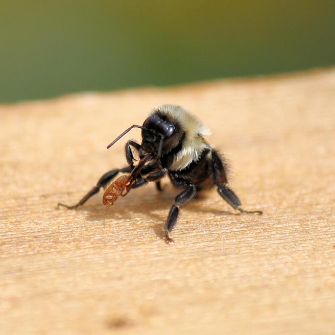 bee bug one