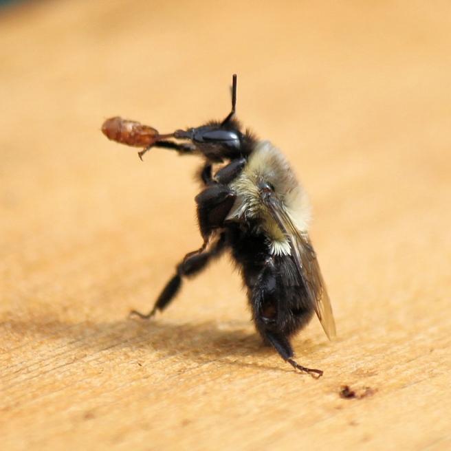 bee bug two