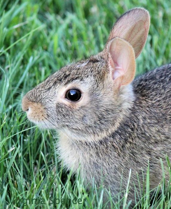 bunny furry cute