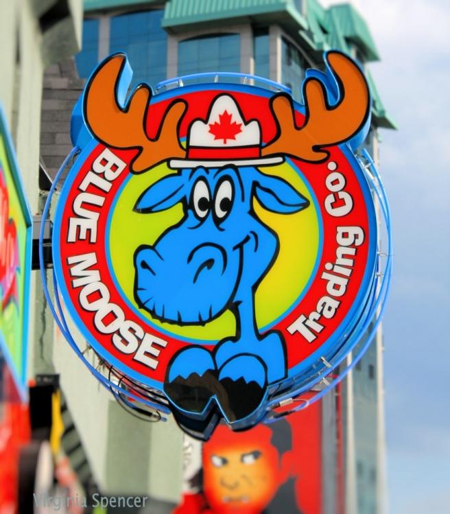 canada blog moose