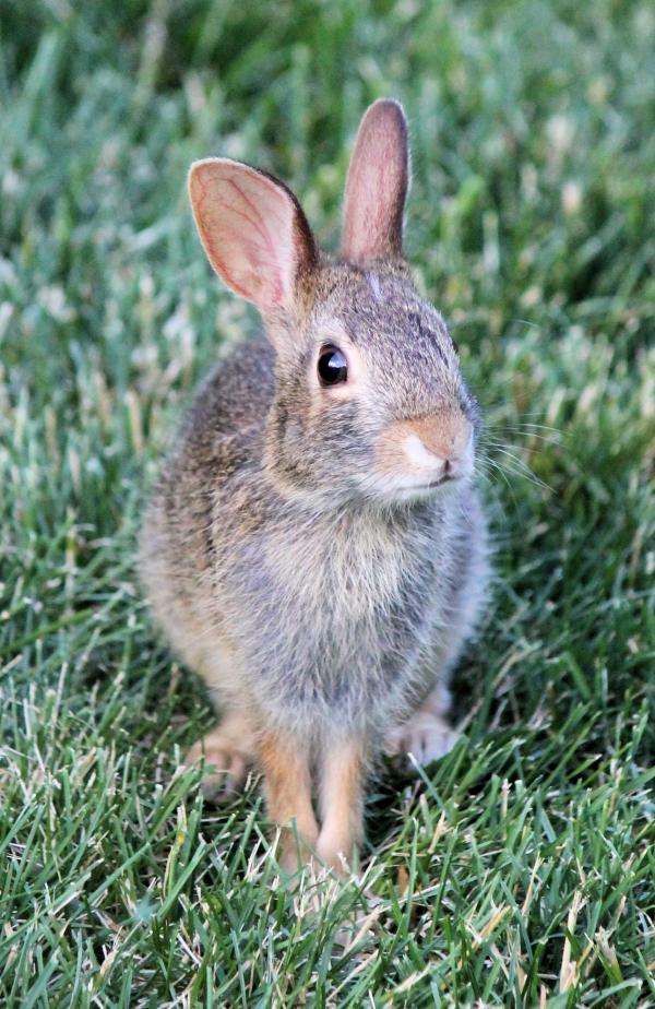 bunny blog