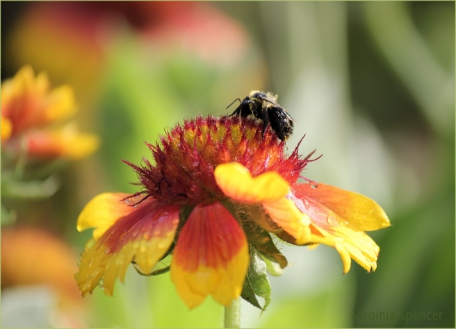 bee-flower-pollen-photography